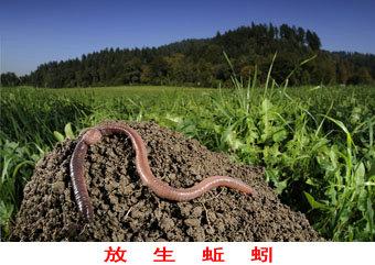 蚯蚓,属于环节类动物,本来在泥土里
