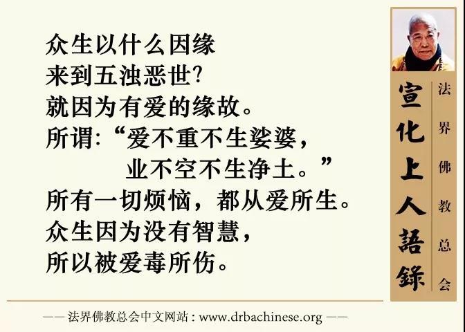 一对男女堕落为草木的因果(宣化上人) - 纯净心 - 纯净心