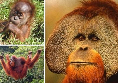 珍稀中的珍稀:12种最濒临灭绝的动物